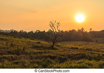 Evening At Khao Yai - Sun was about to set at grassland area...