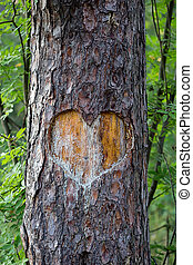 heart carved on a tree forest