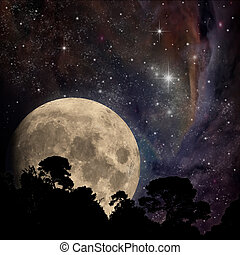 Moon - A Night Sky with Moon and Trees