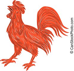 Chicken Rooster Crowing Drawing