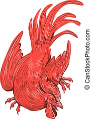 Chicken Rooster Crouching Drawing - Drawing sketch style...