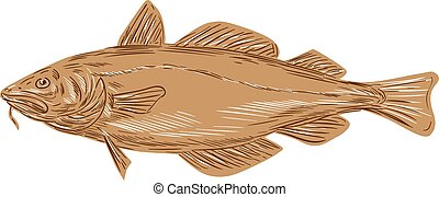 Atlantic Cod Codling Fish Drawing - Drawing sketch style...