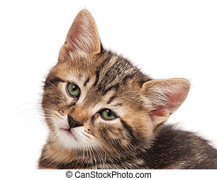 Sad small kitten isolated over white background