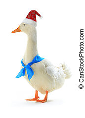 duck - red cap of Santa on a duck with a blue ribbonon a...