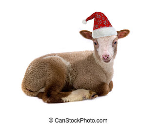 sheep - red cap of Santa on a sheep is isolated on a white...