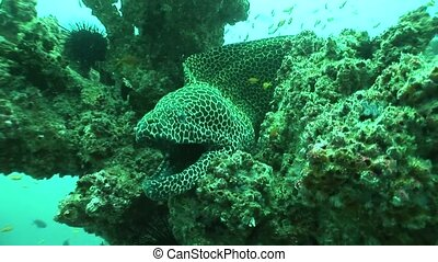 coral life diving Mozambique Africa - Underwater South...