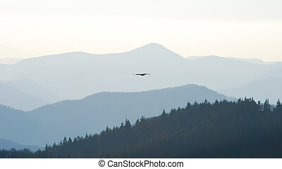 Swift eagle - Mountain landscape with swifting eagle in the...
