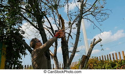 Man cuts off old branches on the tree using a saw. - The...