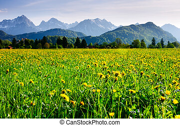 Alpine meadow covered by flowers