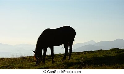 One horse grazing at dawn on background of mountains