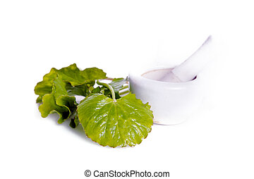 Centella asiatica or Thankuni in Indian, Buabok leaf in...