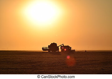 Harvesting by combines at sunset. Agricultural machinery in...