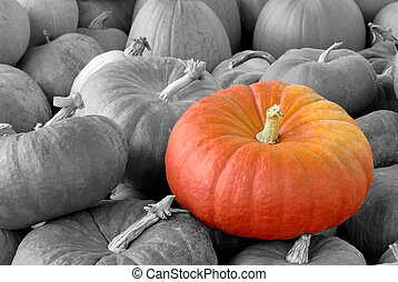 Pumpkin standing out of the crowd - A Vibrant pumpkin on top...