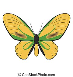 butterfly - vector illustration of beatiful butterfly
