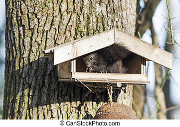 Squirrel sitting on a bird seeder - Squirrel plunders a...