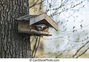 Nuthatch on a bird feeder - Nuthatch sitting on a birdfeeder