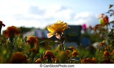 flower and bokeh with splashes of water at sunset