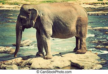 Elephant bath in river Sri Lanka - Elephant bath in river at...