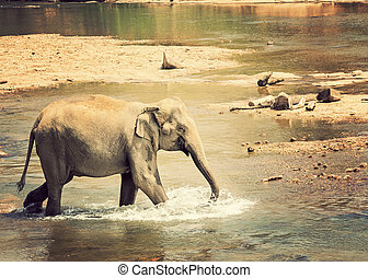 Bathing elephant - Bathing of the elephant in river jungle...