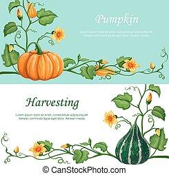 Harvest celebration banners.