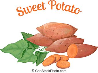 Sweet potato. Vector illustration made in a realistic style,...