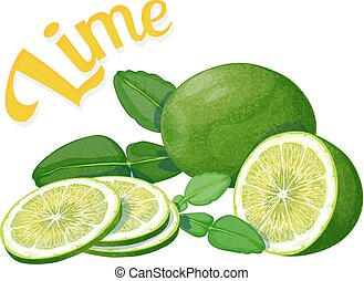 Lime. Vector illustration on a white background executed in...