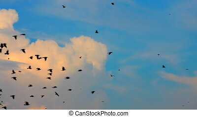 Flying birds - A huge flock of rooks and crows flying in the...