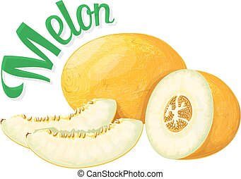 Melon. Vector illustration on a white background executed in...