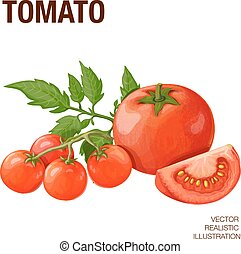 Tomatoes - Isolated tomatoes on white background. Vector...