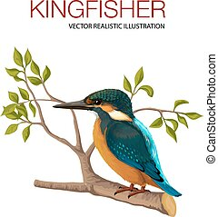 Kingfisher - Vector illustration made in a realistic style