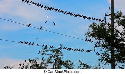 A flock of black birds