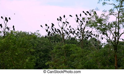 A flock of black crows - A large flock of black crows flying...