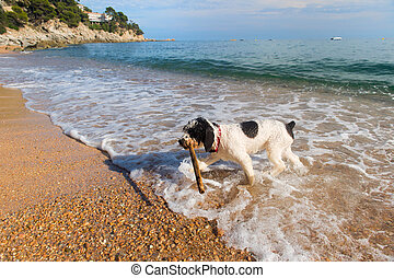 Dog at the beach - Dog playing with stick in the sea