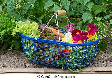 Harvest from the vegetal garden - Blue harvest basket full...