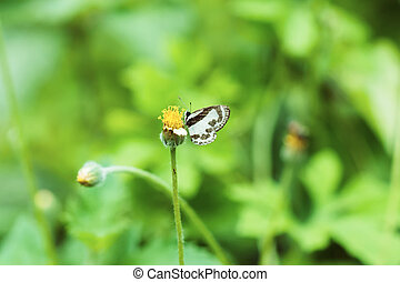 Butterfly perched on flower grass.