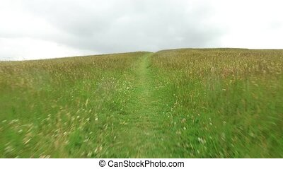 summer field and path 60 - nature and environment concept -...