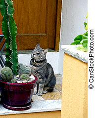 Cat waiting in front of the door - Cute grey cat standing in...