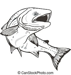 Salmon fish - King salmon fish. Hand drawn