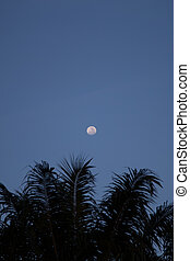 Full Moon above Coconut Tree