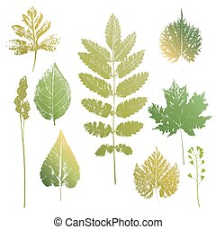 Collection of leaves and grass imprints - Collection of...