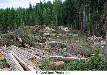 Forestry with a clear cut area - Landscape with newly cut...