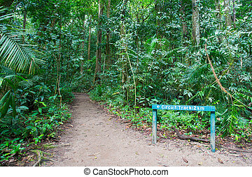 Mossman Gorge Pathway - Footpath thru dense rainforest in...