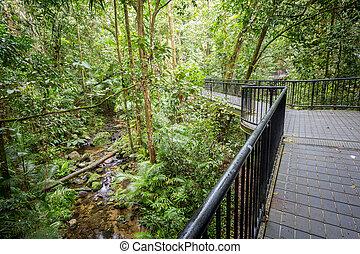 Mossman Gorge Pathway - Footpath thru dense rainforest in...