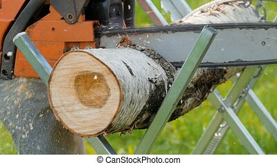 Man sawing a tree using a chainsaw for firewood. - Man...