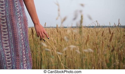 Hands girls slip on wheat - A young girl walks in a wheat...