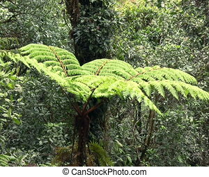 Interior of cloudforest in Western - Zoom out from tree fern...