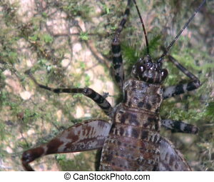 Crickets mating on a tree trunk