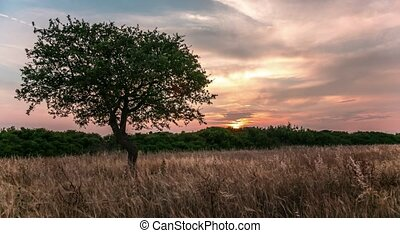 Lonely tree in a field with sunset on the background. 4k, time lapse.