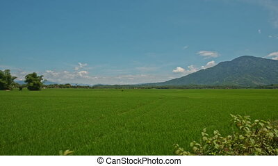 Camera Moves along Road past Rice Fields against Sky in...