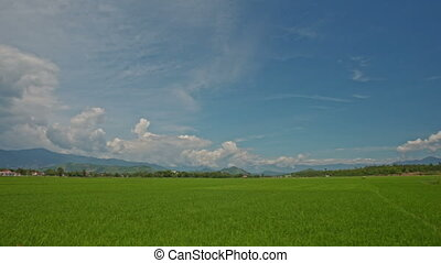Camera Moves along Green Rice Fields against Sky in Vietnam
